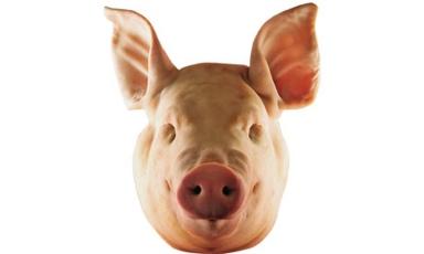 Pigs-head-001